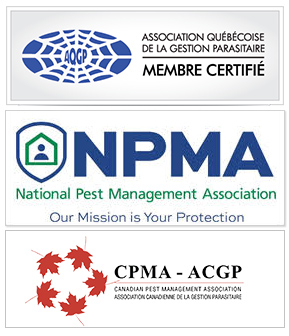 Membre Certifié