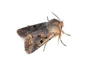 Close Moths Extermination Falcon photo